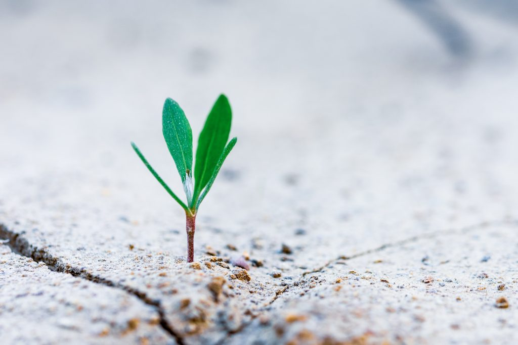 plant sprouting in cement for ESG and ecology