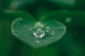 water droplet on green leaf