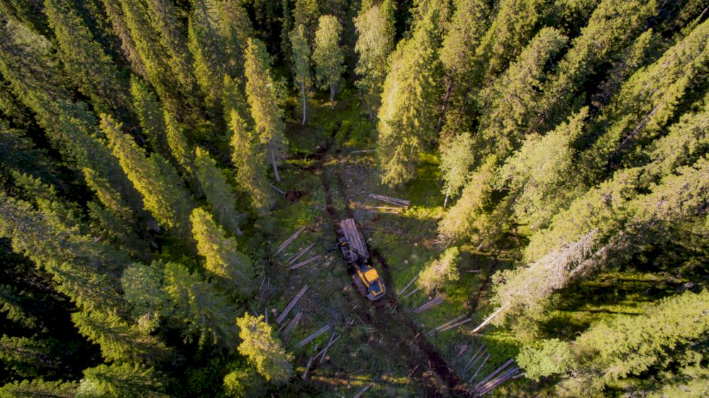 russian forestry launches greenest IPO